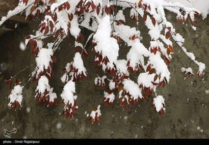 هشدار هواشناسی: برف و کولاک خراسان رضوی را فرامیگیرد